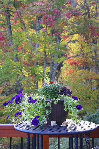 Fall Color at the Mountain House