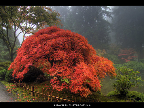 One Foggy Fall Morning at Portland Japanese Garden 3 by David Gn Photography