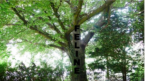 Feline Tree