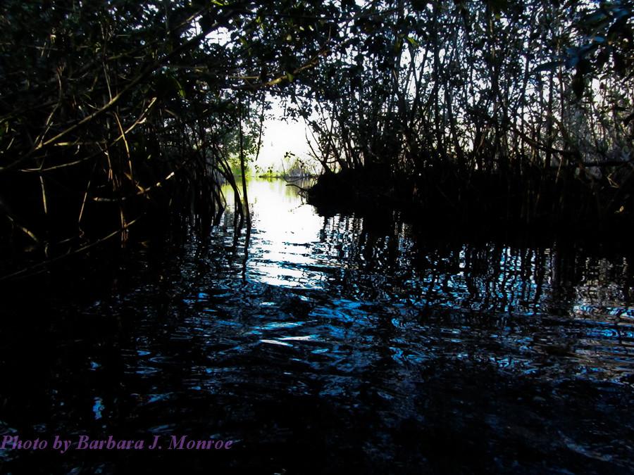 Everglades National Park-Kayaking (2 of 19)