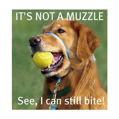 Gentle Leader is not a muzzle!