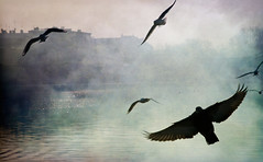 (mattrulez) Tags: winter sunlight mist bird texture nature birds fog river geotagged raw pigeon dove riverbank krakoff mywinners aplusphoto platinumheartaward nikond300 geo:lat=50047377 geo:lon=19947804