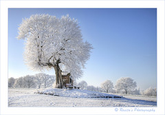 The Chapel and the Tree (♥ Damona-Art •.¸¸.•´¯`•.♥.•´¯`) Tags: trees winter light snow nature landscape photography landscapes frames nikon raw seasons searchthebest belgium chapel mystical horst hdr d300 stpietersrode thesecretlifeoftrees zauberwelt