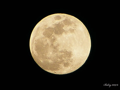 Biggest full moon 2009!! (Bakryy) Tags: moon night yahoo big bright egypt saturday nasa fullmoon finepix nights fujifilm moons biggest bigmoon finepixs5700 fujifilmfinepixs5700 saturdaymoon s5700 biggestmoon bakryy biggestmoonof2009 brightestmoon2009 biggestmoon2009 saturdaybigmoon saturdaysbigmoon saturdayfullmoon 2009sbiggestfullmoon biggestfullmoonof2009 biggestandbrightestmoonof2009 saturdaysnightbiggestfullmoonof2009 brightestmoonof2009 bigmoon2009 saturdaysfullmoon bigfullmoon fujicilmfinepix