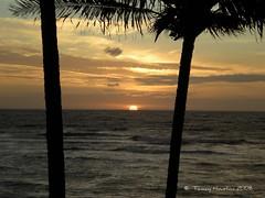 Sun on the Horizon (tammybeck) Tags: ocean sky clouds sunrise hawaii nikon scenic palmtrees pacificocean kauai kapaa digitalcameraclub