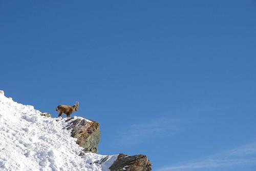 發現一隻山羊在這 好帥氣!