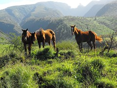 SkyLine EcoAdventures - Horses at HQ