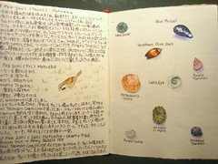 Pages from my Travel Journal: New Zealand (noriko.stardust) Tags: travel original newzealand shells bird art history nature illustration painting notebook japanese natural drawing journal picture illustrations blogger sparrow watercolour southisland visual notebookism jounalling
