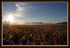 foggyfield (John Barrie Photography) Tags: fog clouds cornfield unedited asis morningfog originalshot masonohio untouchedimage johnbarrie johnbarriephotography foginafield sunriseonfarm groundhaze velocityphotography