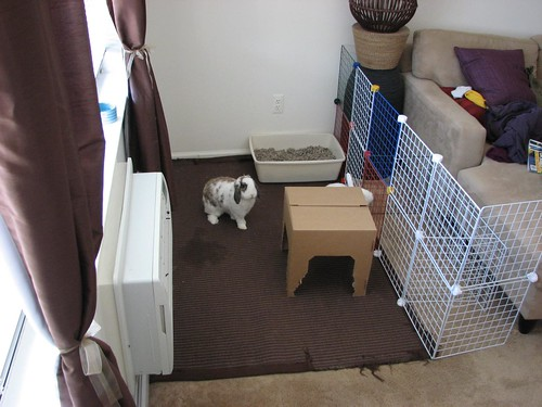 empty bunny area and confused betsy