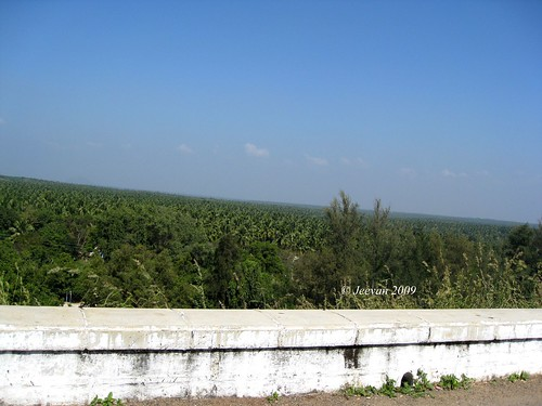 View of Coconut groves, Aliyar Dam