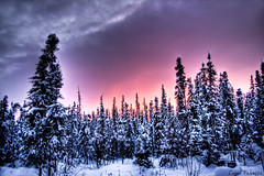 Day is Done... (Akfirebug) Tags: winter sunset snow beautiful alaska fairbanks akfirebug falcetta