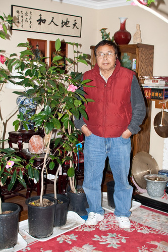 John Wang places camellias inside the house to hand pollinate them