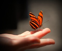 The Butterfly Touch (GlossyEye.) Tags: world travel original orange color love nature beauty closeup butterfly bug wonder photography freedom la fly flying photo wings nikon colours hand vibrant ace touch group free grace 55mm photograph passion effect technique fa 18mm bautiful differenza  lamicizia nikond40  thepowerofnow lamiciziafaladifferenzatheoriginalgroup picnikorpicnic