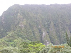 Tropical Eden (Designer Michael) Tags: mountains island hawaii rainforest oahu cliffs tropicalisland tropicalparadise hawaiianvacation lushvegetation islandvacation
