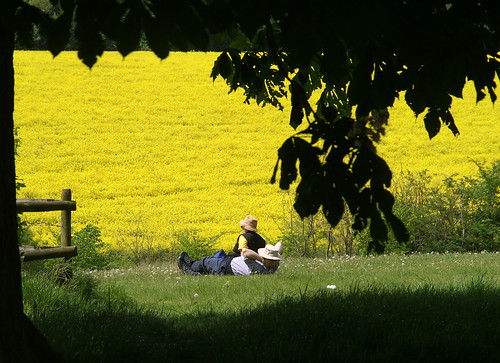 Rest - Wimpole Estate, Cambridgeshire