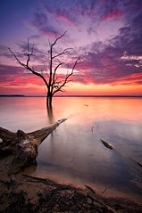 August Evening (tobey308) Tags: blue red lake color tree oklahoma water silhouette vertical reflections sand purple vibrant horizon highlights colorphotoaward eufaulasunsets toddtobeyphotography