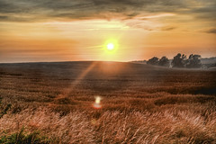 Fields of Gold (Werner Kunz) Tags: life trip travel sunset vacation sky sun holiday nature field yellow fog clouds photoshop germany landscape island deutschland nikon europe earth wheat urlaub harvest vivid wideangle german planet 40 growing ruegen dri hdr hdri deutsch werner reise vorpommern mecklenburg kunz fieldofgold photomatix 20fav explored colorefex nikond90 topazadjust werkunz1