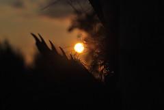 tramonto ad Ischia