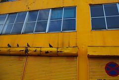 駐車禁止だってよ 鳩の会話 (muronavi5) Tags: 黄色
