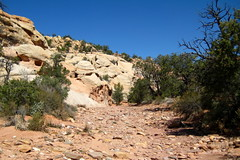 Capitol Reef National Park, Upper Muley Twist Canyon, (darthjenni) Tags: trip travel red vacation white nature rock stone landscape outdoors utah sandstone colorado desert plateau hike trail canyonlands geology escalante formations geological darthjenni