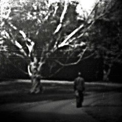 Solitary Man. (r i c k . m) Tags: autumn texture branches fingers destiny paths limbs solitary companions twisting nkl hourofthesoul