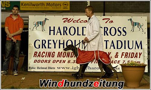 Chocolat Camolin at Harold's Cross Greyhound Stadium