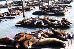 A lazy day.. happy Sunday ^_^ (Mel@photo break) Tags: sf sanfrancisco california usa animal san francisco sleep mel lazy seal wharf fishermans fishermanswharf melinda  chanmelmel melindachan