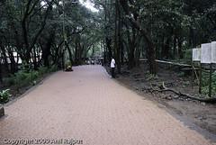 Paver blocks inside Matheran (Anil_R) Tags: india trekking trek hiking monsoon maharashtra matheran westernghats