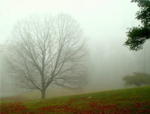 Misty Autumn by natureluv.