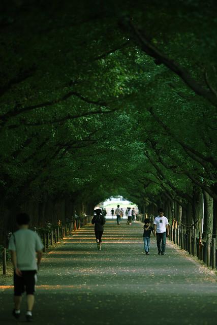 深緑の並木道