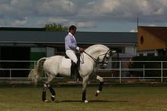 326_2603 (JUANLUBIS) Tags: horses horse sport canon caballo cheval caballos competition cavallo cavalo equestrian equine equus chevaux dressage equitation horserider galope domaclsica dressur equineart domaclasica horsesanddreams