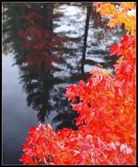 The Eagles Perspective.... (reflectionsofthenorth) Tags: autumn ontario nature reflections landscape olympus wolfcreek northernontario groupofseven naturephotography killarneyprovincialpark ontarionature provincialparks autumninontario ontarioprovincialparks fallinontario tysonlake reflectionsofthenorth fallcoloursinontario autumncoloursinontario