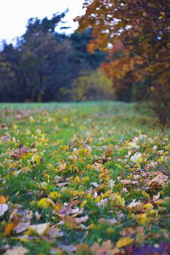 Leaves in the grass