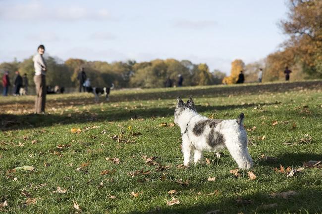 Small dog, Prospect Park