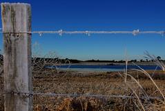 Lago congelado (Miriam Cardoso de Souza) Tags: gelo lagocongelado azul natureza cerca inverno geada arame farpado aramefarpadowinter vilaolivainteriordecaxiasdosulrs