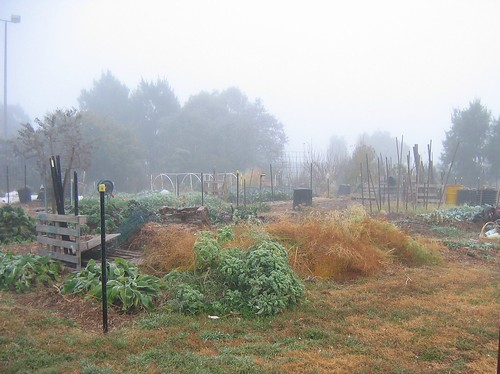 Foggy morning compost