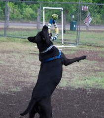 Lakecreek Dog Park-0055.jpg (srj459s) Tags: park dog ruby lakecreek