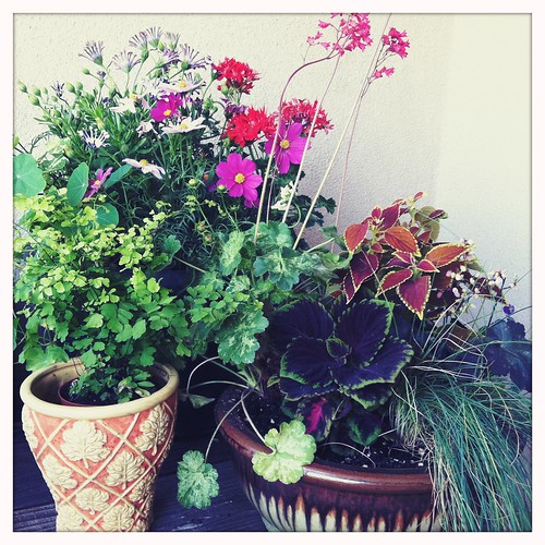 a few containers in my garden