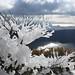 樹枝の凍結