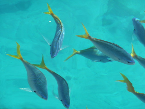 beautiful fishes in sea. Beautiful fish, 2hrs out to sea
