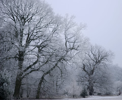 Winter trees (Ben124.) Tags: trees winter snow cold frost surrey coulsdon platinumphoto