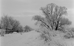 Winter (JaZ99wro) Tags: film analog epson ilford mamiya645 fp4plus v750 autaut epsonv750 perceptol13
