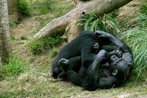 Ape Play