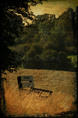 Misty's View (Lee Orchard Photography (LeoPhotography)) Tags: park trees bench geotagged view textures grasses visualart combined farnhampark mistysview geo:lat=51227656 geo:lon=0798869