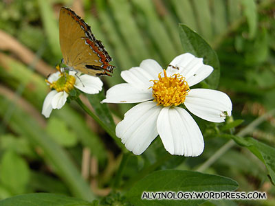 nice flower and butterfly