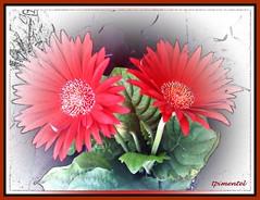 Flores (taniapimentel) Tags: flores flower color nature cores natureza flor cor tania pimentel taniapimentel tpimentel