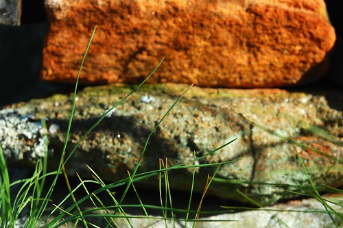 Grass On The Rocks