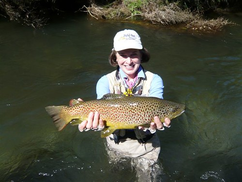 New Zealand Scotch Brown Trout