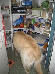 Bailey having breakfast in the panty